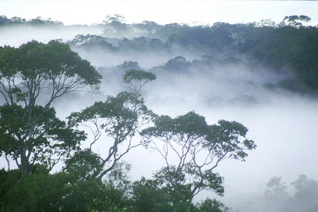 Canopy mist
