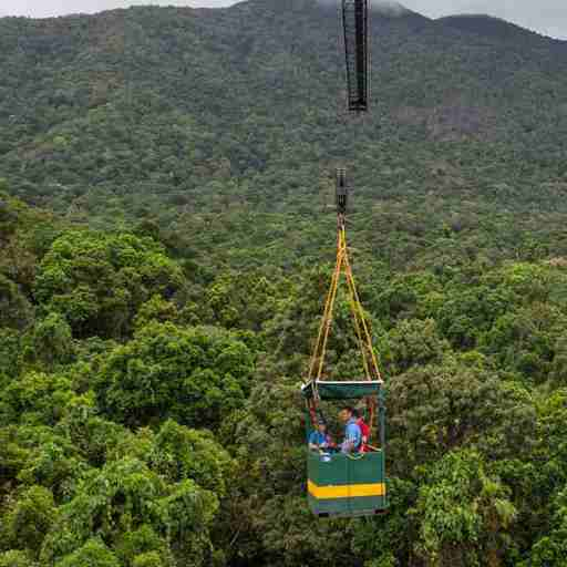 Rainforest crane image