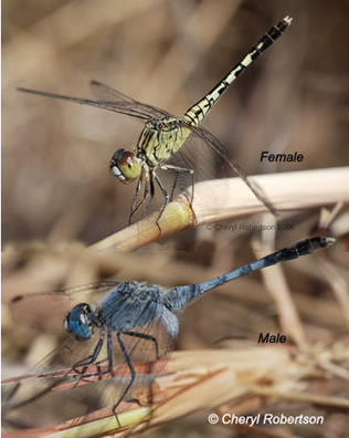 male and female perching