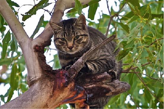 cat in gum tree.