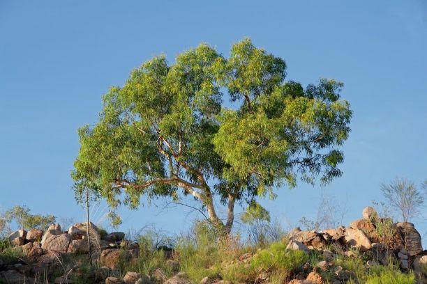 A tree, rocks and a blue sky