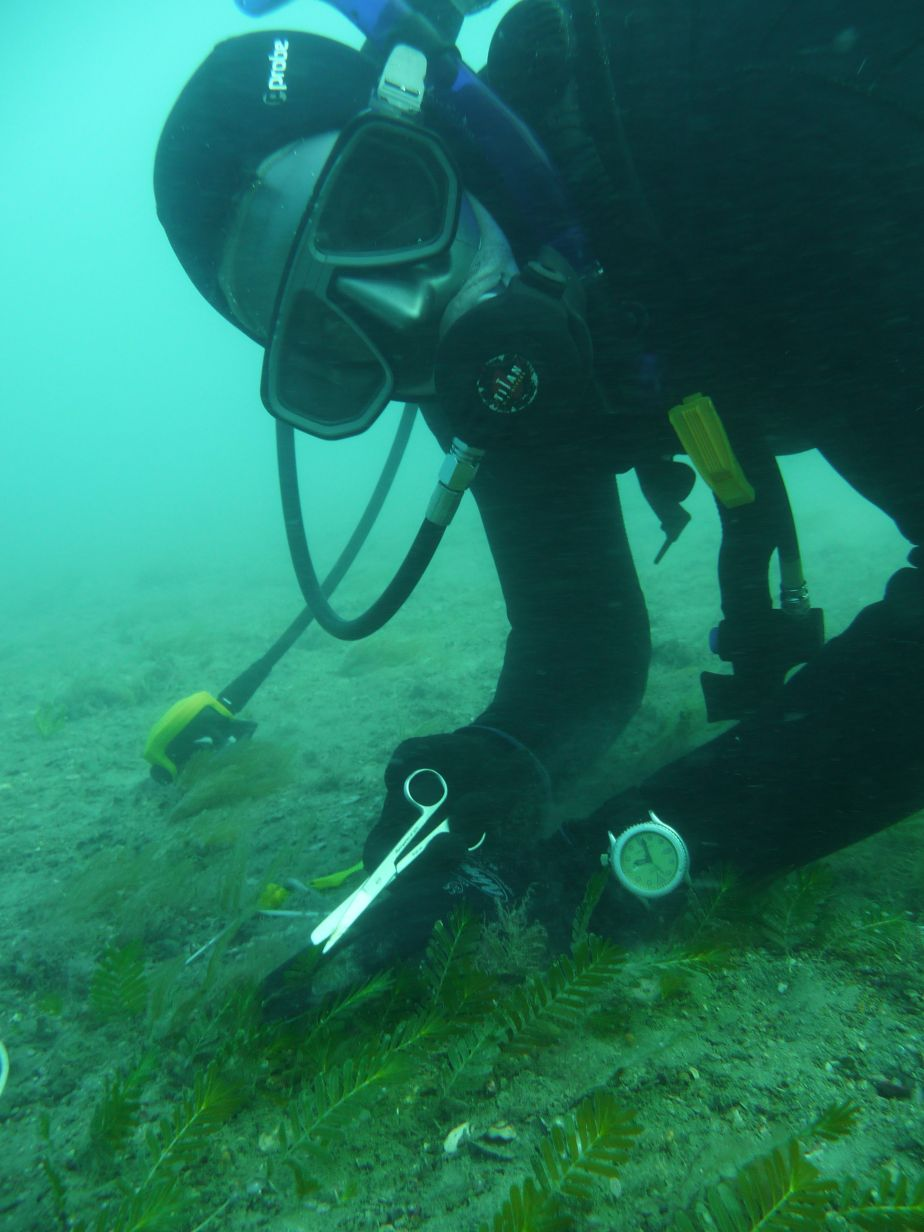 Water quality and seagrass monitoring starts at Weipa - JCU