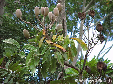 Pods on branch