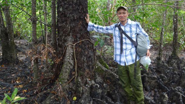 Hidetoshi Kudo and the Haines Orange Mangrove (Bruguiera hainesii) he 'found'