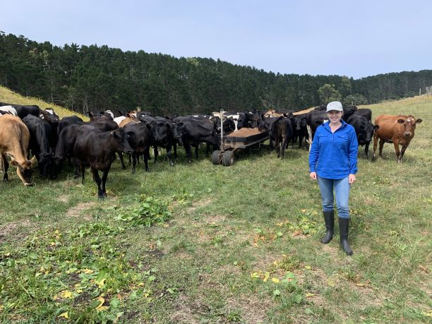 Christine with cows while on placement in New Zealand