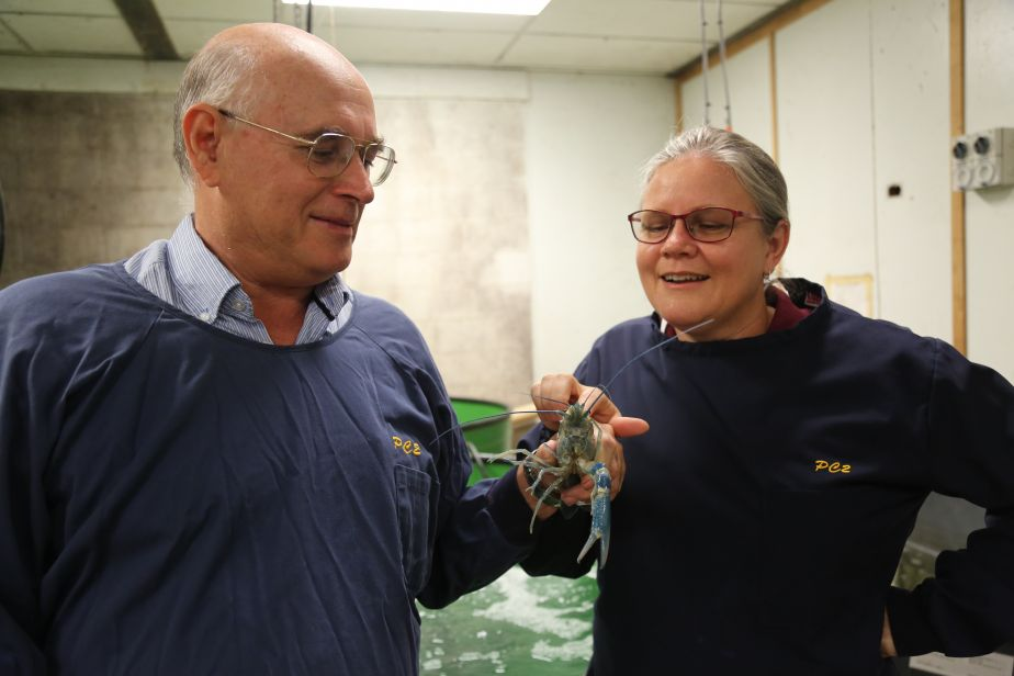 Associate Professor Leigh Owens and Dr Jennifer Elliman with a red claw crayfish