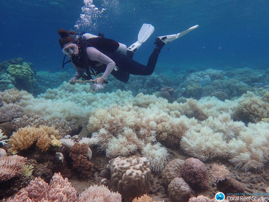 A diver taking notes underwater, just above bleached coral.