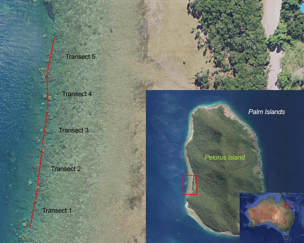 Map showing the transect paths for south west Pelorus Island image Pelorus Island south west transects