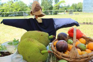 Community Garden fruits