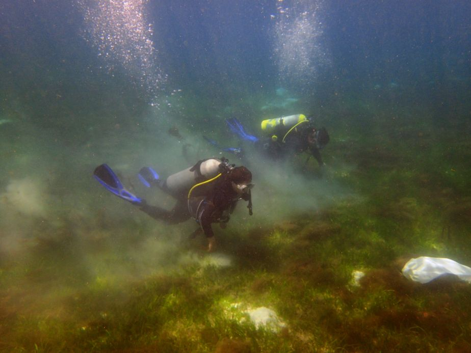 Diving on a seagrass meadow