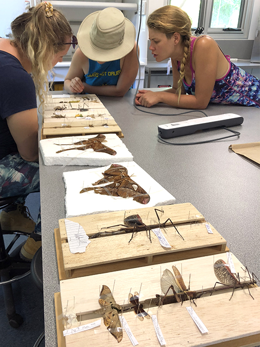Students preserving insects