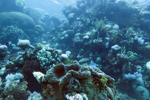 coral affected by ocean acidification