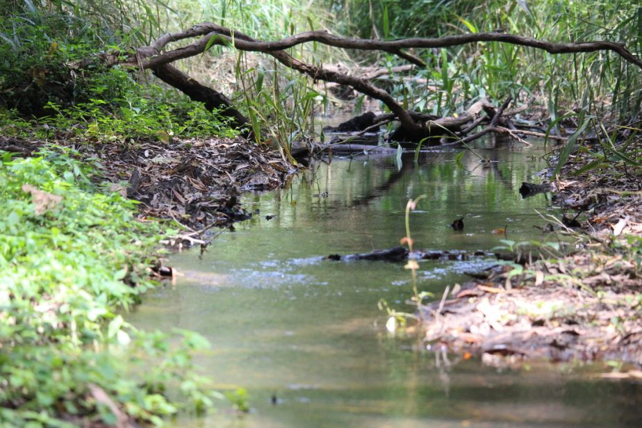 Insulator Creek