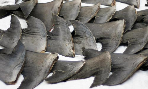 Sustainable sharks