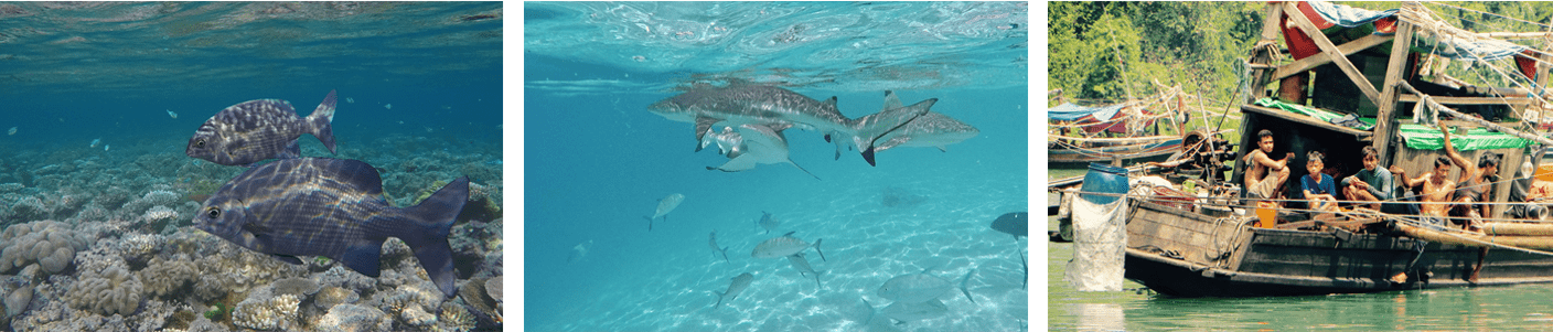 Banner image showing shark, fish and a boat.