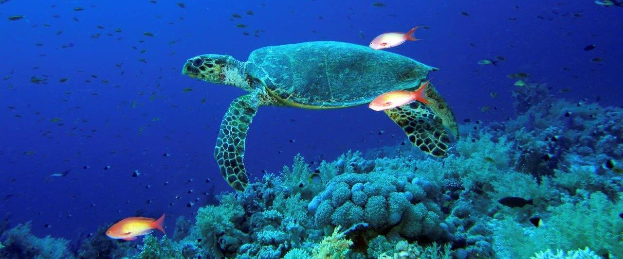 Thursday Island - JCU Australia