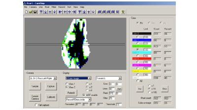 RAU avocado scan graphic