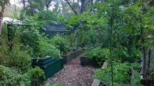 Rotary community garden