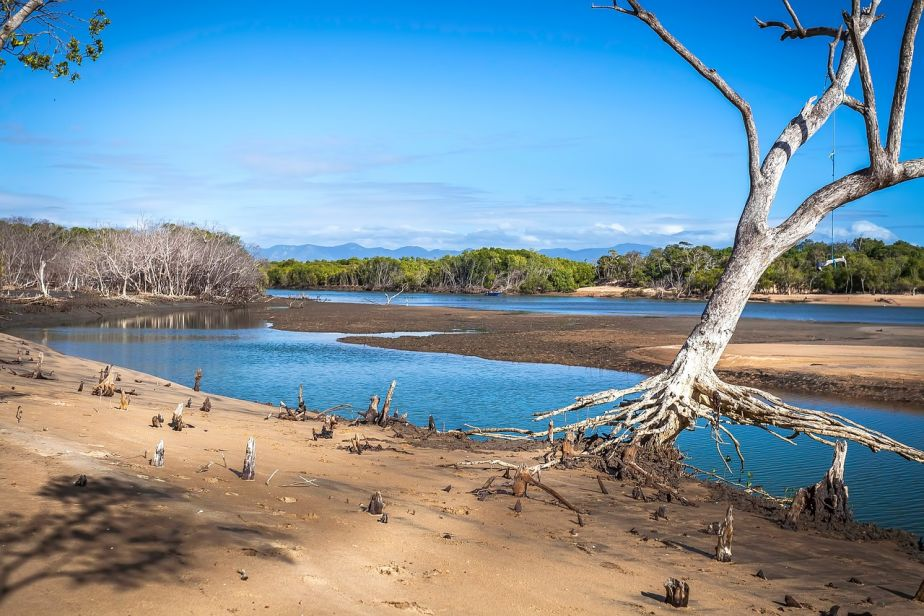 the tide out at the mouth of a creek, showing exposed tree roots and lots of sand