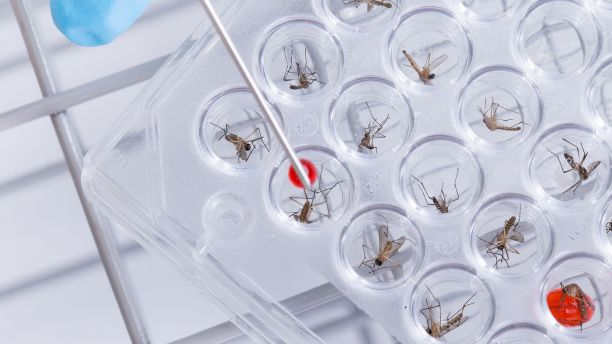 Dead mosquitos in a lab