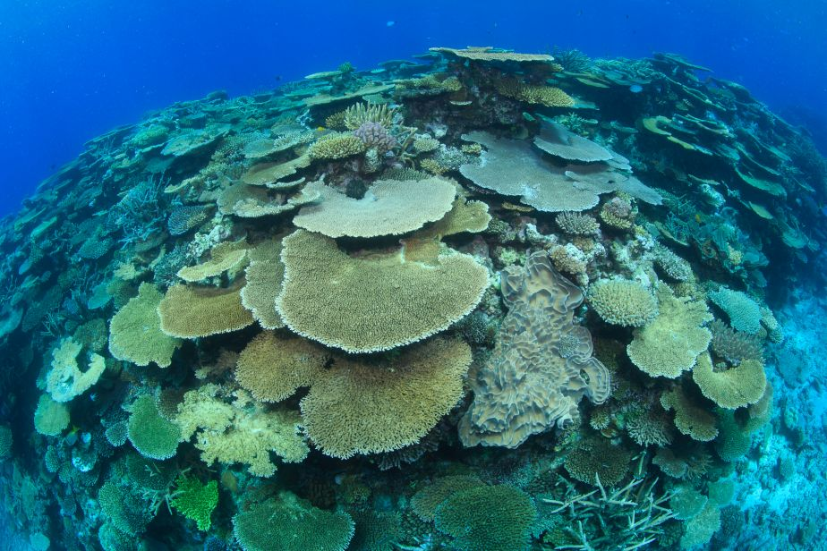 Complex reef structure on the Great Barrier Reef by Tane Sinclair-Taylor