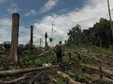 man walking on logged trees.