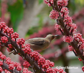 feeding on flowers and fruit