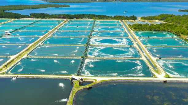 Aerial view of prawn farms with water contained in various large pools