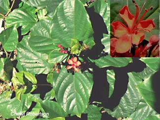 Vine, leaves and flower closeup insert