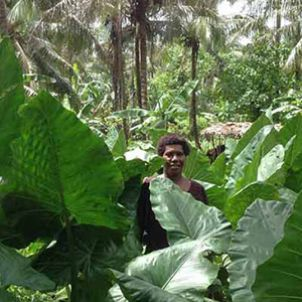 Photo of Sustainable tropical agriculture