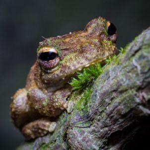 Photo of BZ2450 - Biodiversity of Tropical Australia