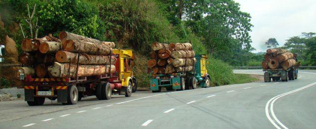 Logging in Malaysia