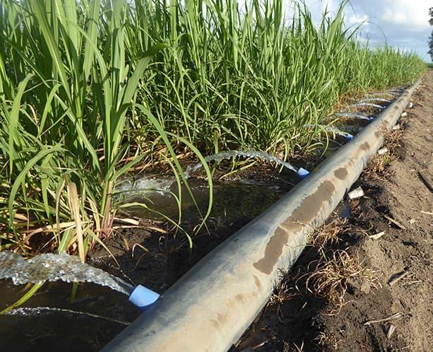 Irrigation system for sugarcane crops