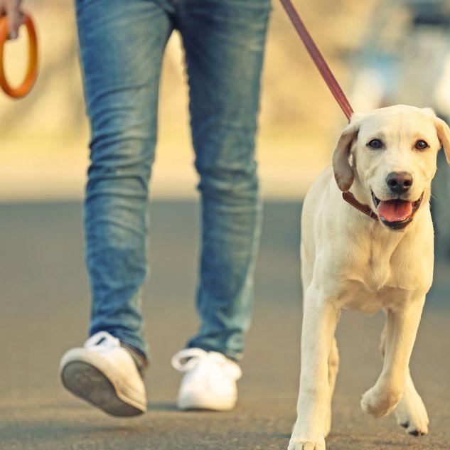 Person walking dog