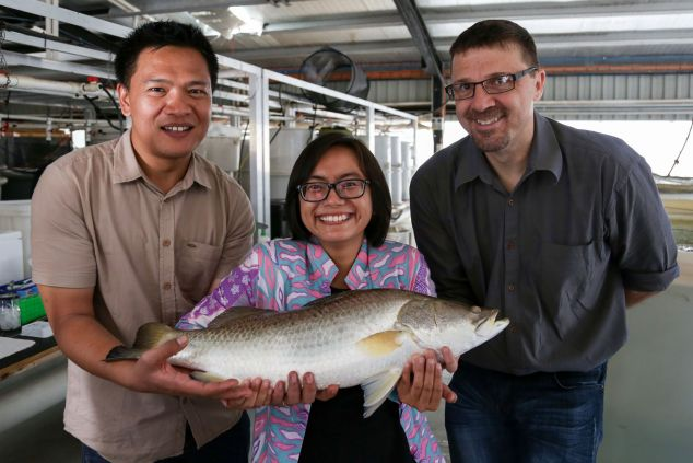 Two men and one woman hold a barramundi